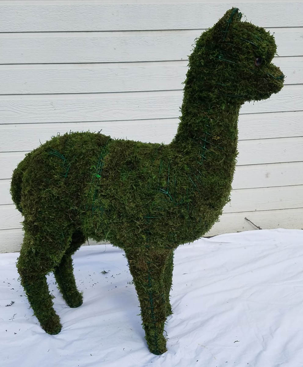 Alapca Baby Moss Topiary