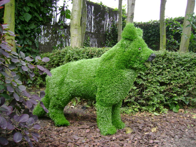 German Shepherd Grass covered