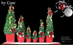 Live-Ivy-Cone-Christmas-Topiaries