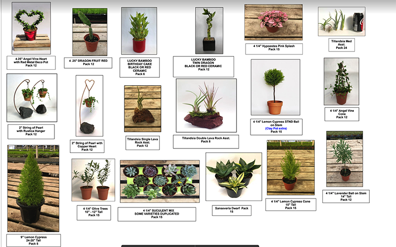 availability of live topiaries