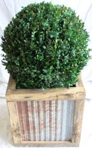 24 inch diameter preserved boxwood topiary