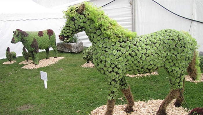 custom made horse and cow topiary