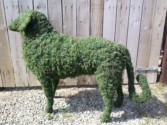 custom made Sheep Moss Topiary