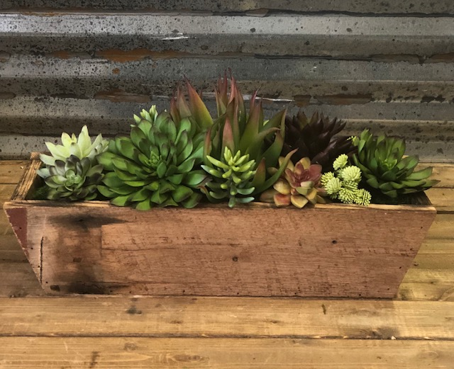 succulents inside a wood box tray