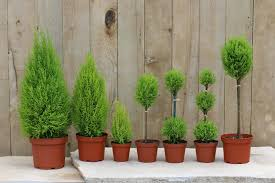 guide to planting live topiaries