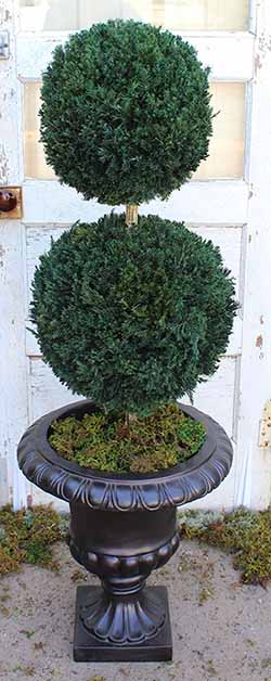 how to care for a live preserve topiary double ball