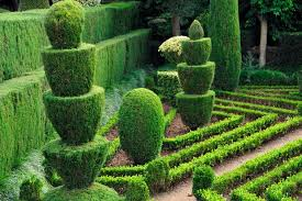 how to landscape an outdoor topiary gardne