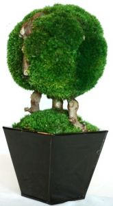 Preserved Ball Topiary