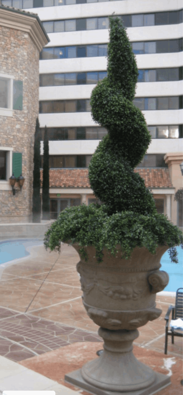 /Let us help you design your outdoor topiaries.  This is a outdoor spiral topiary.png