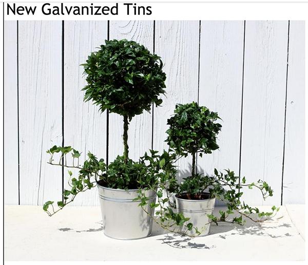 Fantastic Live Topiary Trees Amp Plants Artificial Amp Outdoor Topiary Door Handles Collection Olytizonderlifede
