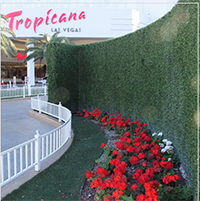 outdoor topiary wall living in Las Vega