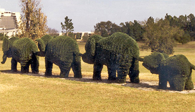 outdoor elephant topiaries