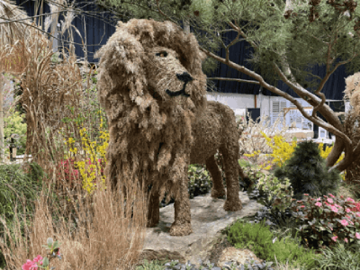 own a life size Lion topiary without having to visit a zoo or Africa