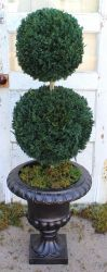Double Ball Topiary 40""