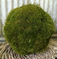 10 inch   Preserved Moss Ball