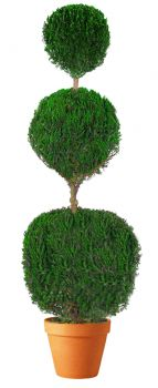 Preserved Triple Ball Topiary 40""
