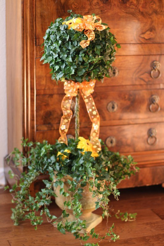 4.5 LB Stem Ivy Topiary
