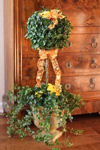 4 and 5 LB Stem Ivy Topiary