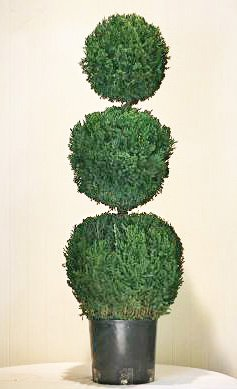 Preserved Triple Ball Topiary 50""