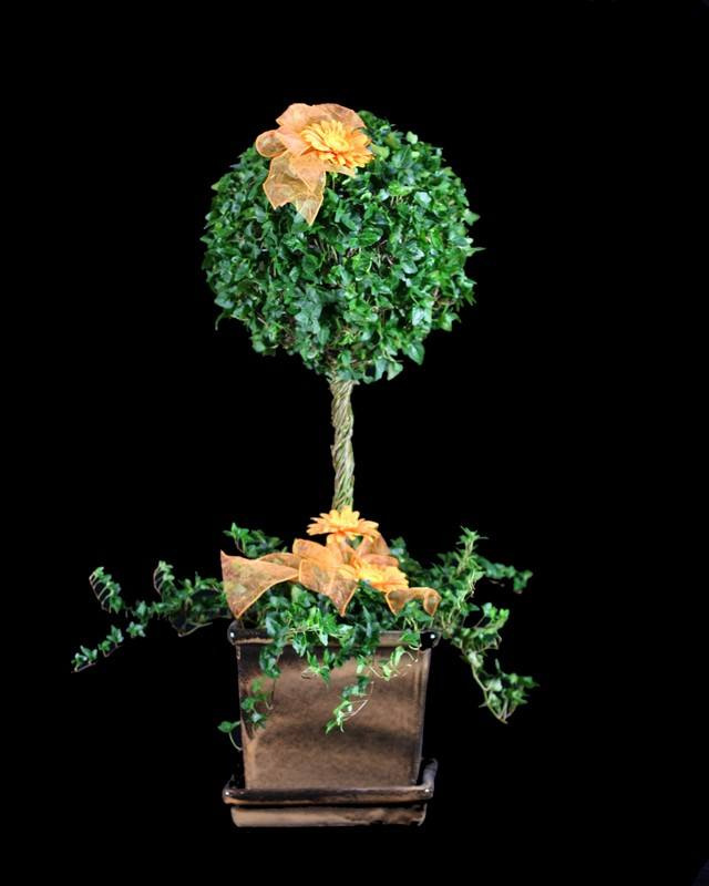 10 LB Stem Ivy Topiary