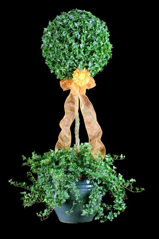 17.5 LB Stem Ivy Topiary