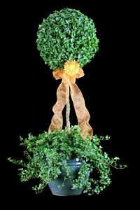 17 and 5 LB Stem Ivy Topiary