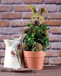 398G, Ivy Live Topiary Plants