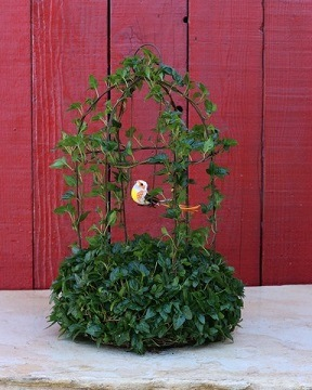 403G, Ivy Live Topiary Plants