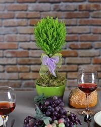 Ball Shaped Live Cypress | TopiaryTree and net | Fresh Live Topiary