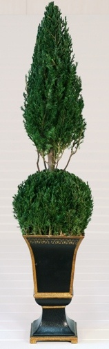 Preserved Ball Cone Topiary 30""