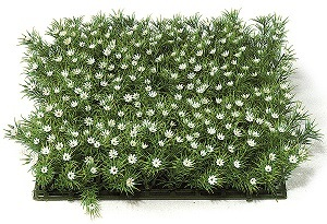 10 inch   Plastic Grass with Gypso (White)