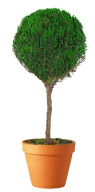 Preserved Single Ball Topiary 40 inch