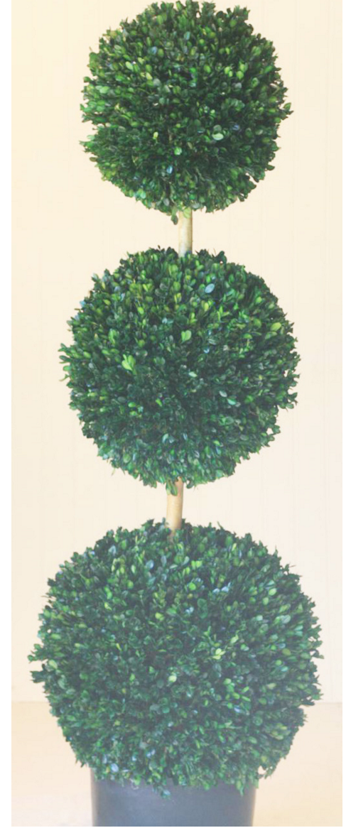 60 inch   Triple Ball Boxwood Topiary