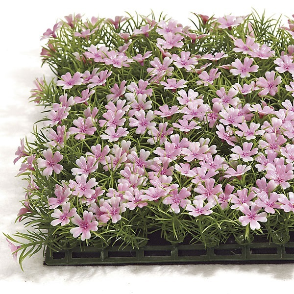 10 inch   Sprengeri Mat with Flowers (Pink)