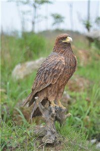 Golden Eagle, 14 inch x 11 and 5 inch x 26 and 75 inch