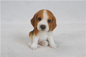 Pet Pals Sitting Beagle Puppy, 4 and 75 Inch x 6 and 25 Inch x 6 Inch