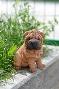 Pet Pals Sitting Shar Pei Puppy,  6 Inch x 5 Inch x 6 and 25 Inch