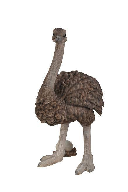 Ostrich Standing 27 Inch High, 17 Inch x 12 and 5 Inch x 27 Inch