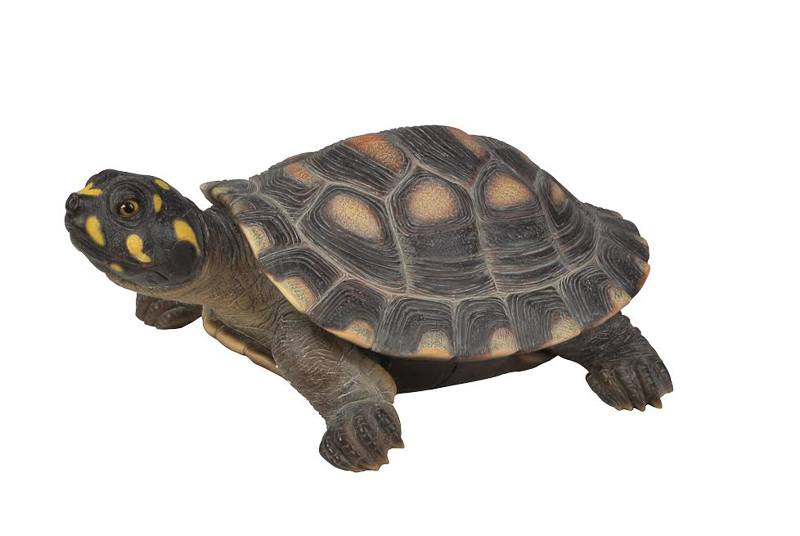Large Spotted Turtle, 17.5 Inch x 13 Inch x 7 Inch