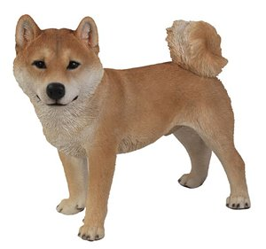 Dog Shiba Inu Standing, 19 and 5 inch   x 10 inch   x 16 and 5 inch