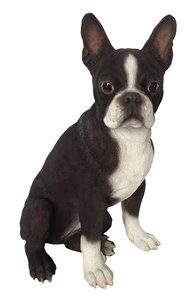 Dog Boston Terrier, 10 Inch x 10 Inch x 16 and 5 Inch