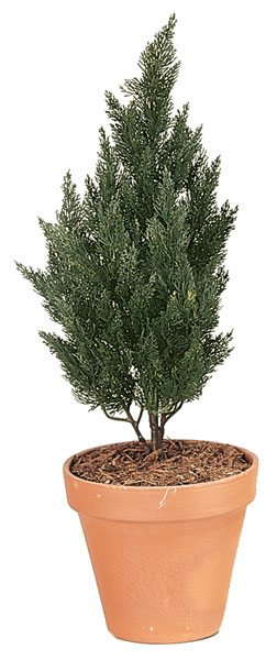 37 Inch Polyblend Cypress (Small)