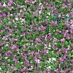 Landscape Leaves A006 Purple