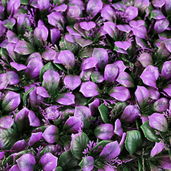 Landscape Leaves A055 Purple