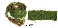 Artificial Topiary Trees, Topiary Wall, Artificial Moss Roll
