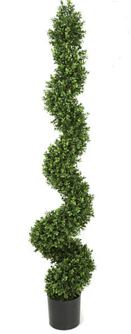 70 Inch Boxwood Spiral Topiary Limited UV Resistant