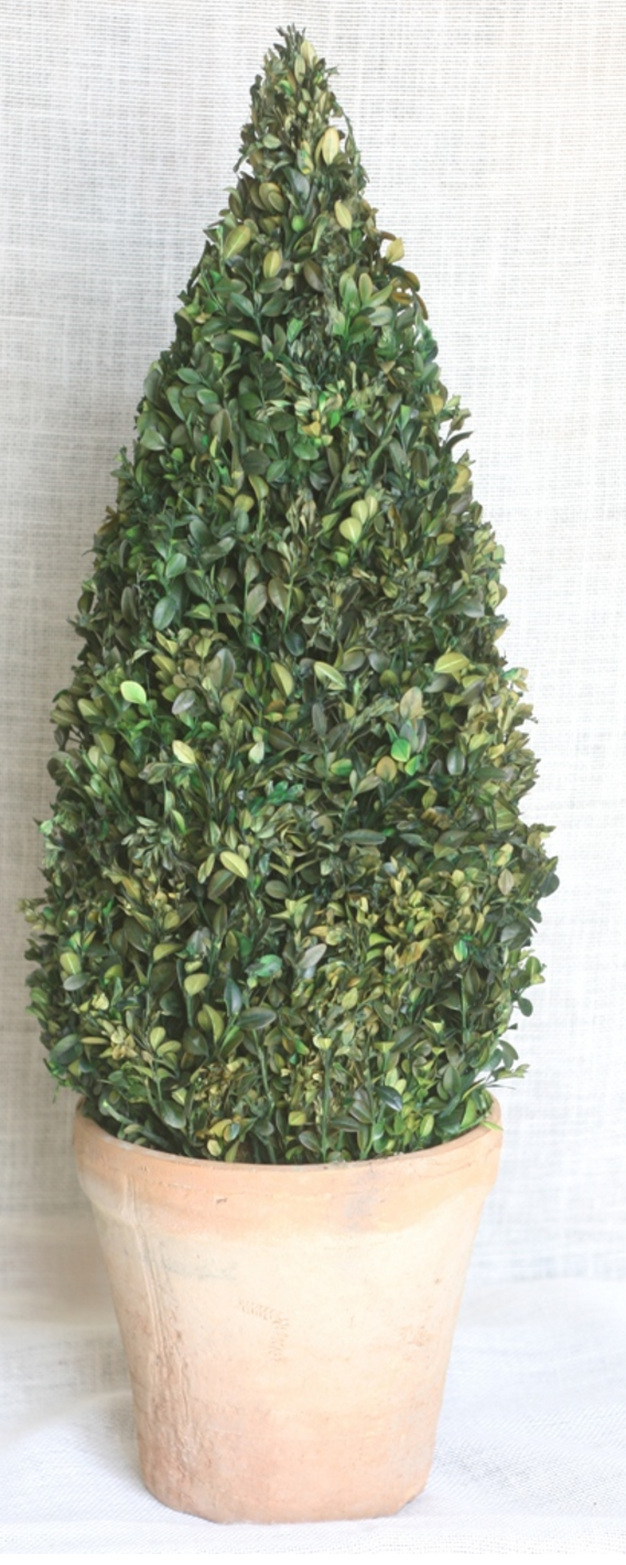 30 inch   Boxwood Cone Topiary