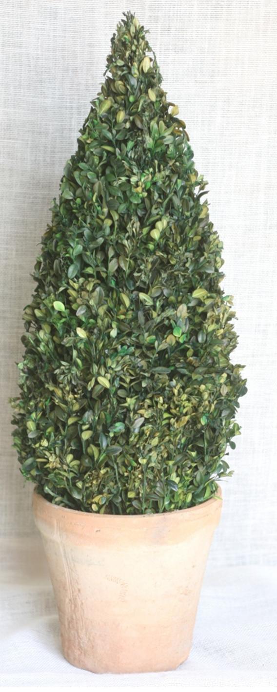30 Boxwood Cone Topiary