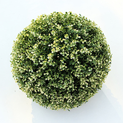 Artificial Topiary Ball C002 White