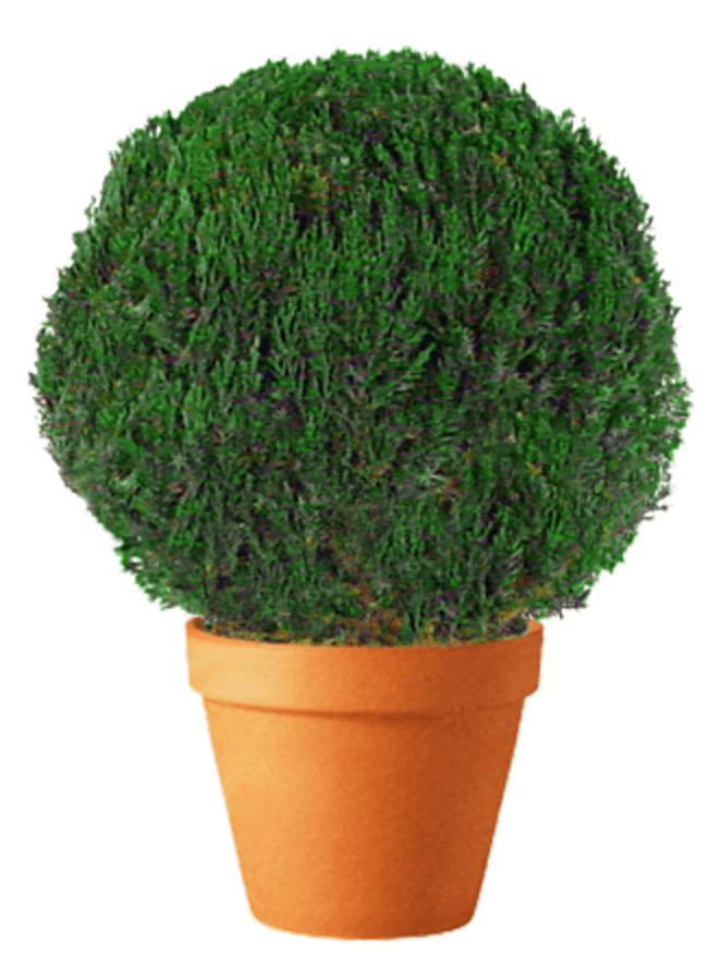 Preserved Globe Topiary 36 inch in Juniper Foliage